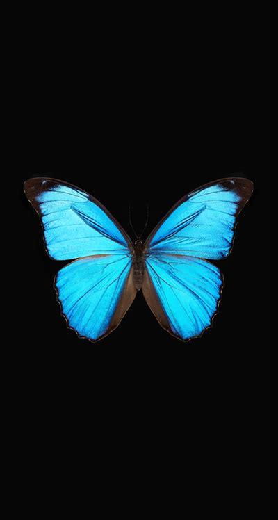 blue butterfly wallpaper blue wallpaper