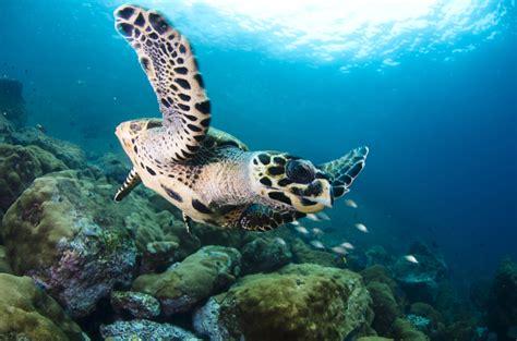 Dive Destinations by Padi S Summer Divelympics 2016 Top Dive