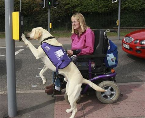 how do animals help humans amazing dogs trained to help humans