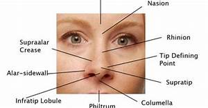 Nasal Surface Anatomy