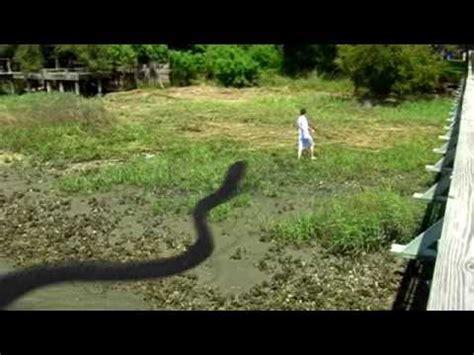 giant snake youtube