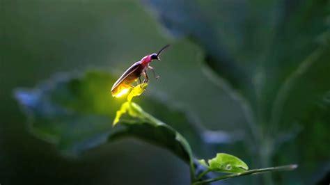 Fireflies In Iowa Youtube