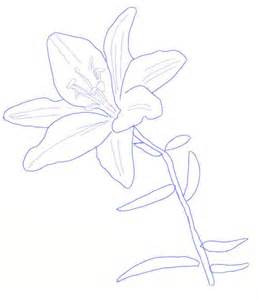 How to Draw a Lily Flower Drawing
