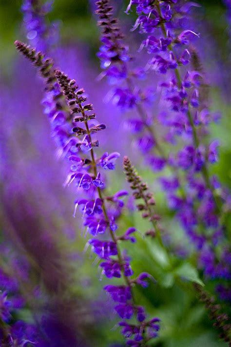 purple flowers purple flowers