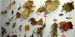 Aus Blättern Basteln : herbstdeko basteln mit kindern ~ Lizthompson.info Haus und Dekorationen