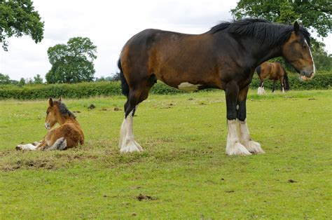 horse average height mom