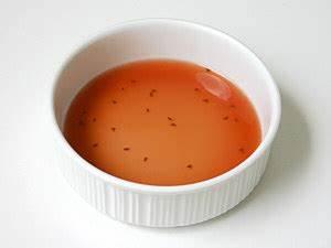 Fruchtfliegen Im Bad : fuck fruit flies neogaf ~ Lizthompson.info Haus und Dekorationen