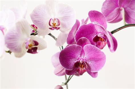 reblooming orchids how to rebloom orchids ftd com