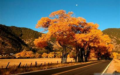 Fall Season Amazing Wallpapers Trees Seasonal Advertisements