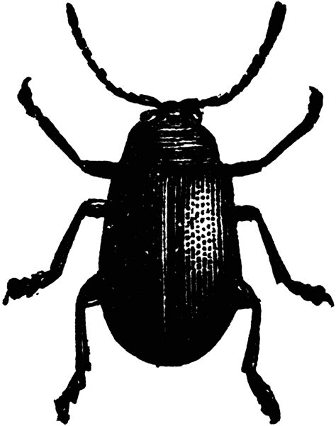 beetle clipart black and white black beetle clipart clipart suggest