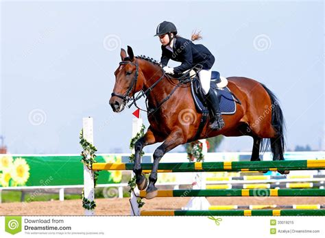 Equestrian sport. stock image. Image of pets, animal ...