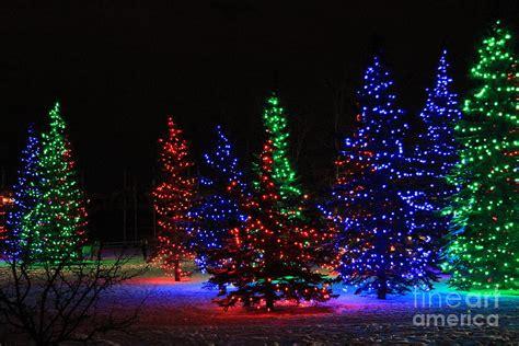 christmas tree lights photograph  helen bobis