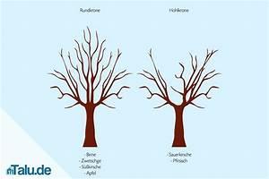 Kirschbaum Richtig Schneiden : apfelbaum schneiden anleitung anleitung apfelbaum selbst ~ Lizthompson.info Haus und Dekorationen