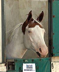 Medicine Hat Horse Markings