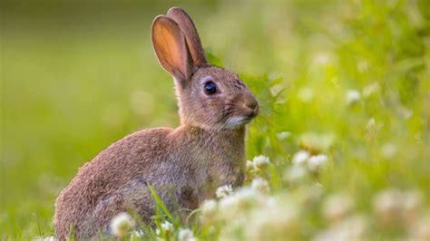 Rabbit Images 14 Facts About Rabbits Mental Floss