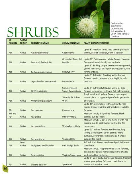 name of shrub south carolina rain garden manual