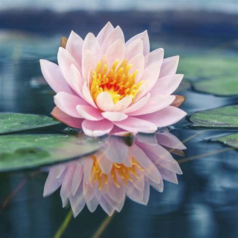 all about aquatic plants types of water plants petal talk