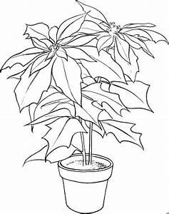 Zimmerpflanze Große Blätter : grosse zimmerpflanze ausmalbild malvorlage blumen ~ Lizthompson.info Haus und Dekorationen