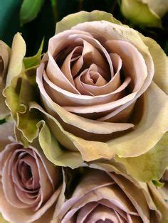 Kitchen Bouquet Near Me by Majolica Roses These Spray Roses Come In A Range