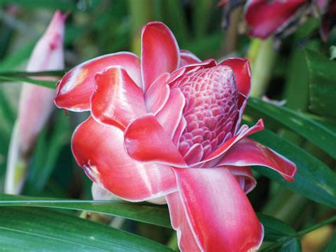 Tropical Flowers And Plants Hgtv