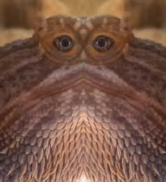 Funny Bearded Dragon