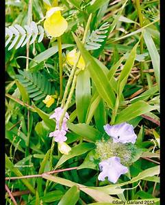 Amazon Rainforest plants and flowers. 'What colour is the ...
