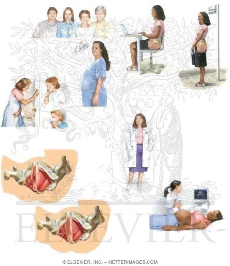 pelvic floor muscle exercises depends diapers site