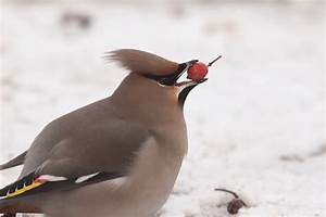 Graines De Tournesol Pour Oiseaux : exceptional graines de tournesol pour oiseaux 12 cedar ~ Dailycaller-alerts.com Idées de Décoration