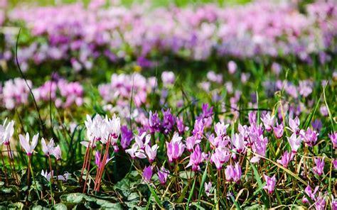 The 21 Best Plants For Winter Garden Colour