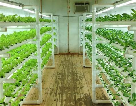 Plant Lighting Hydroponics by Podponics Grows Lettuce In Shipping Containers Converted
