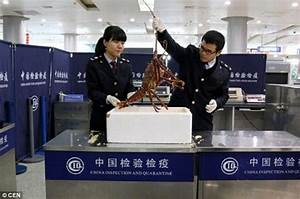 How shellfish Passenger attempts carry LIVE lobster worth 500 luggage Chinese airport creature seized incinerated ments