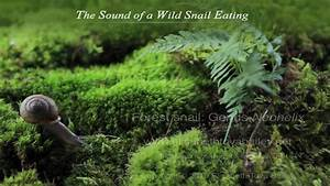 The Sound Of A Wild Snail Eating  Book Trailer