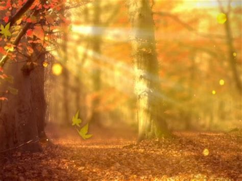 Fall Backgrounds Powerpoint by Fall Forest Background Scribe Media Worshiphouse