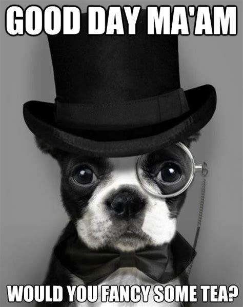 Boston Terrier Meme - photo monday morning boston terrier meme ibostonterrier com ibostonterrier com