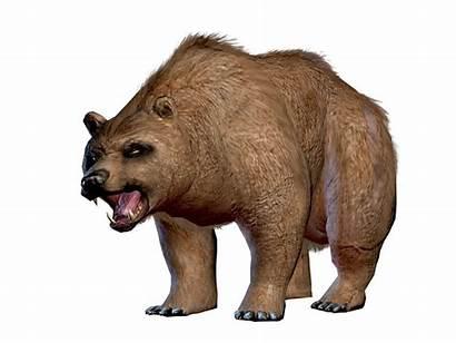 Bear Drakensang Concept Wiki Wikia Armor Fandom