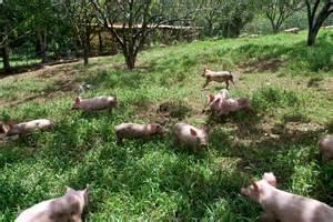 Organic Pig Farming Philippines