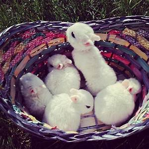 A Group of Bunnies Is Called a Fluffle 13 Facts That