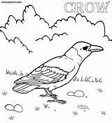 Crow Coloring Pages Line Drawing Template Printable Colorings Sketch Animal Getdrawings sketch template