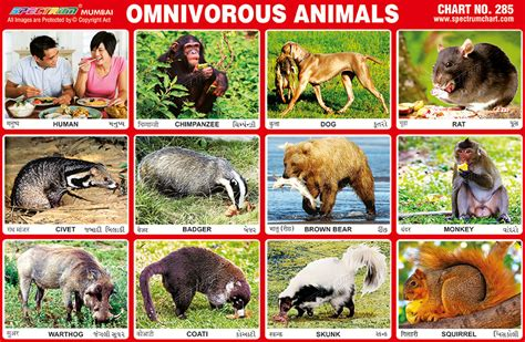 omnivores carnivores herbivores eat plants both meat omnivorous sheep deer horse kinds called