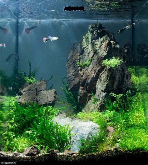 aquascaping freshwater aquarium the 25 best aquarium ideas on aquarium ideas