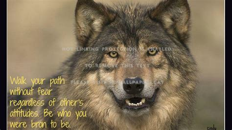 Black Wolf Quotes Wallpaper by Quotes About American Wolf Quotesgram