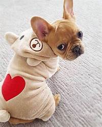 french bulldog accessories 17 Best ideas about French Bulldog Clothes on Pinterest ...