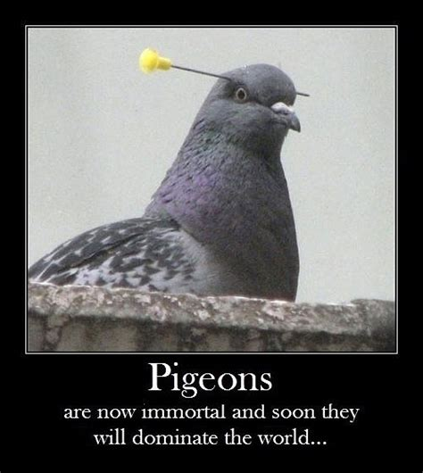 Pigeon Memes - pigeons the meta picture