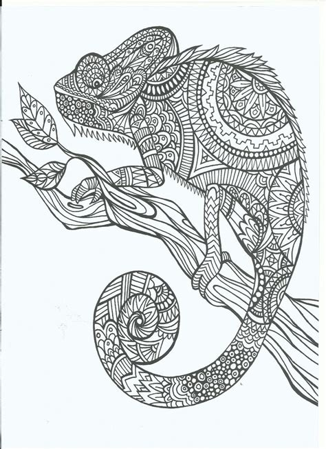cameleon adult coloring therapy  inexpensive