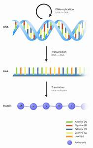 93 Best Illustrating Genomics Images On Pinterest