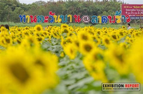 เทศกาลทุ่งทานตะวันบาน @ลาดพร้าว ประจำปี 2559 - งานประจำปี ...