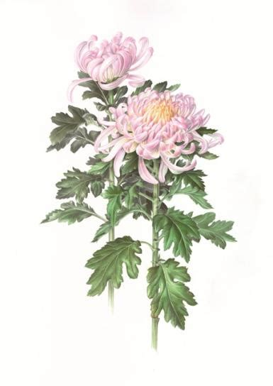 annual american society  botanical artists