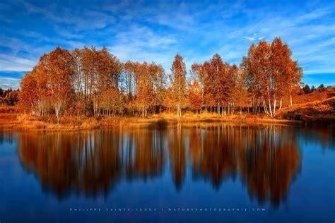 Photos De Forêts En Automne Naturephotographie