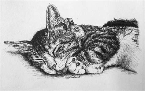 Custom Pen And Ink Cat Drawings By Inspurration The