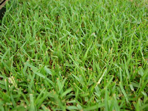 grass types  baton rouge la lawns lawnstarter